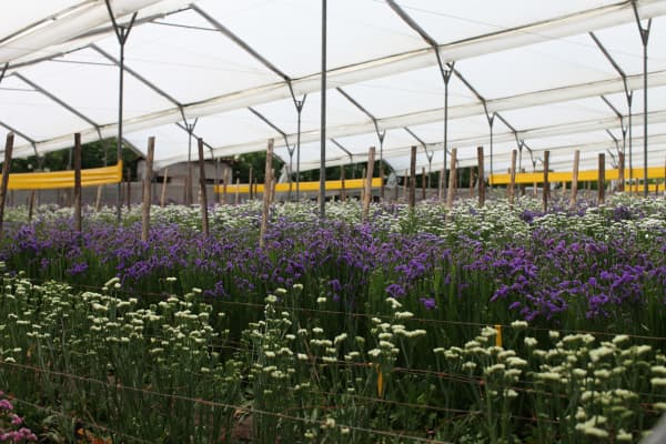 A flower farm in South America.