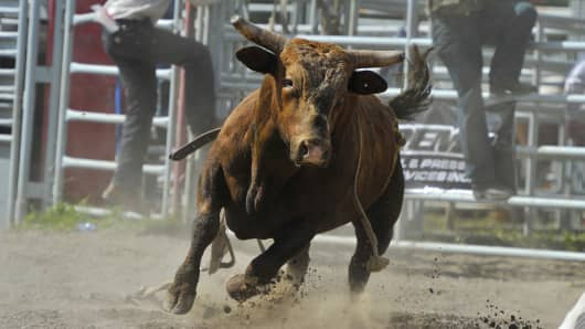 A rodeo bucking bull Bos taurus charges after a competitor in the rodeo arena, AB,