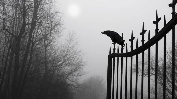 Crow on a fence outside a graveyard, death
