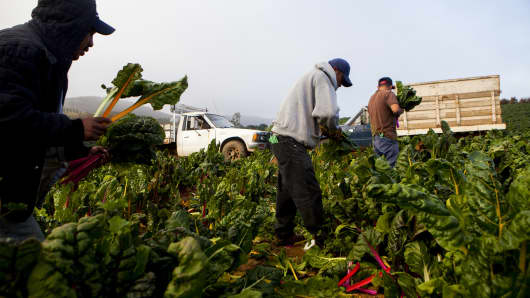 Laborers pick produce on a farm in California.