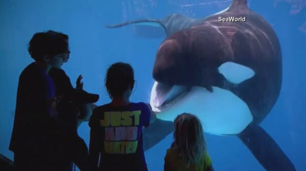 SeaWorld stock takes a dive