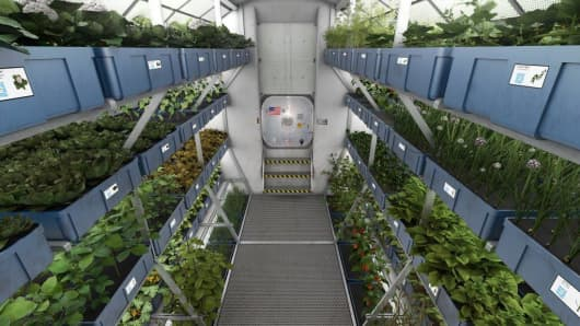 Mock-up of a space greenhouse growing vegetables