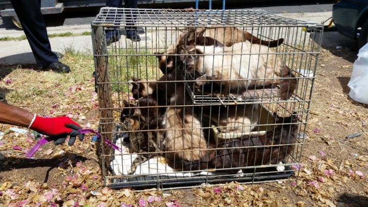 One Of Two Cages Of Cats Found At A San Diego Area Home That Clean