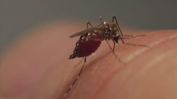 Zika worries put a crimp in Florida travel plans