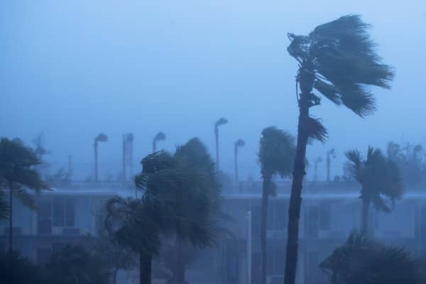 Palm trees blow in the rain and wind from Hurricane Matthew, October 7, 2016 in Ormond Beach, Florida.