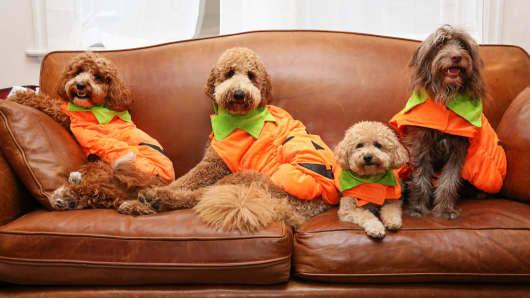 PetSmart Halloween costumes for pets