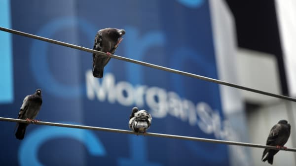 Pigeons sit on a traffic light in front of the Morgan Stanley headquarters in New York.