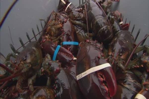 America's lobster craze sends prices soaring