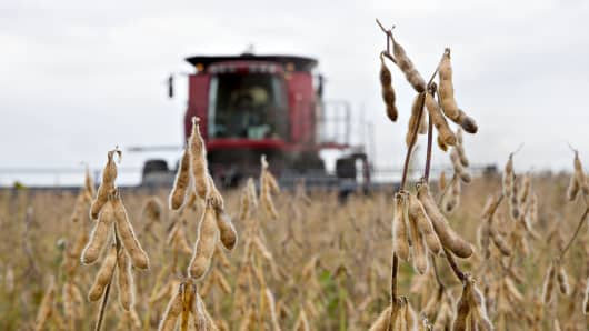 Syngenta Group Co. NK Soybeans are harvested with a Case IH combine harvester near Princeton, Illinois