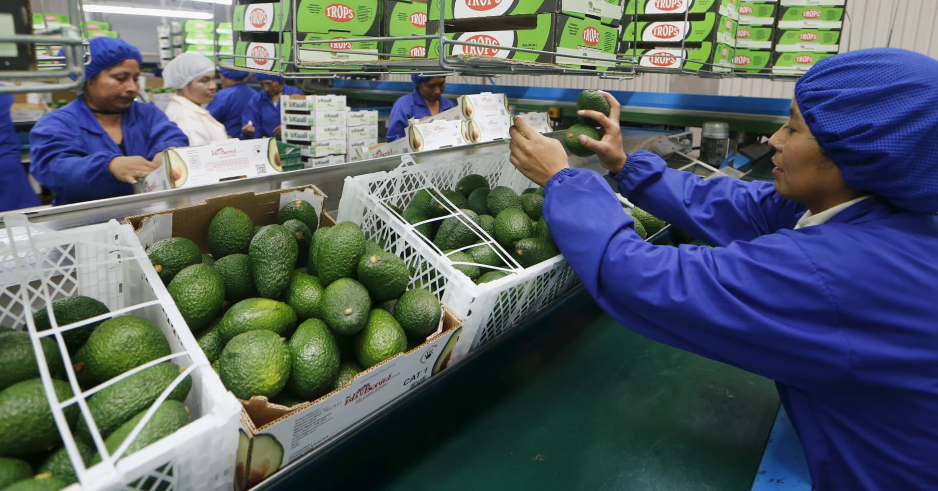 Forget passive investing, put your money into the likes of avocados, says asset manager