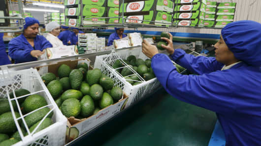 A worker packs avocados at a packaging warehouse
