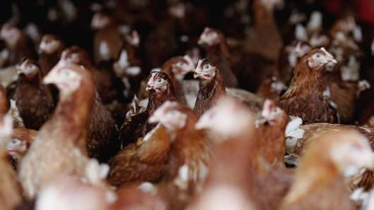 73199851YY013_Poultry_Farme