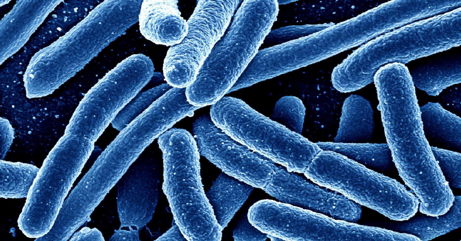 Caltech breakthrough: Bacteria engineered with 'sonar' fight disease