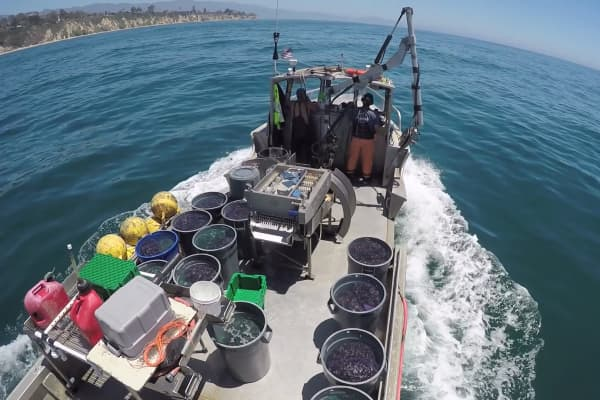 Bernard Friedman captains his boat out into deeper waters where thousands of oysters grow on individual lines.