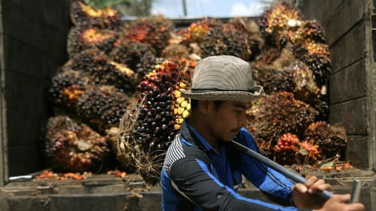 A plantation worker harvests fruit from palm oil trees in North Sumatra, Indonesia.