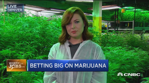 First tribal-owned cannabis operation in US creates jobs