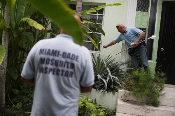 Carlos Varas, a Miami-Dade County mosquito control inspector, uses larvicide granules on plants where water has pooled and mosquitos were breeding as he eradicates them on a property in the Miami Beach neighborhood as the county fights to control the Zika
