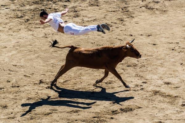 A 'recortador' jumps over a bull during a show in San Sebastian de los Reyes, Madrid.