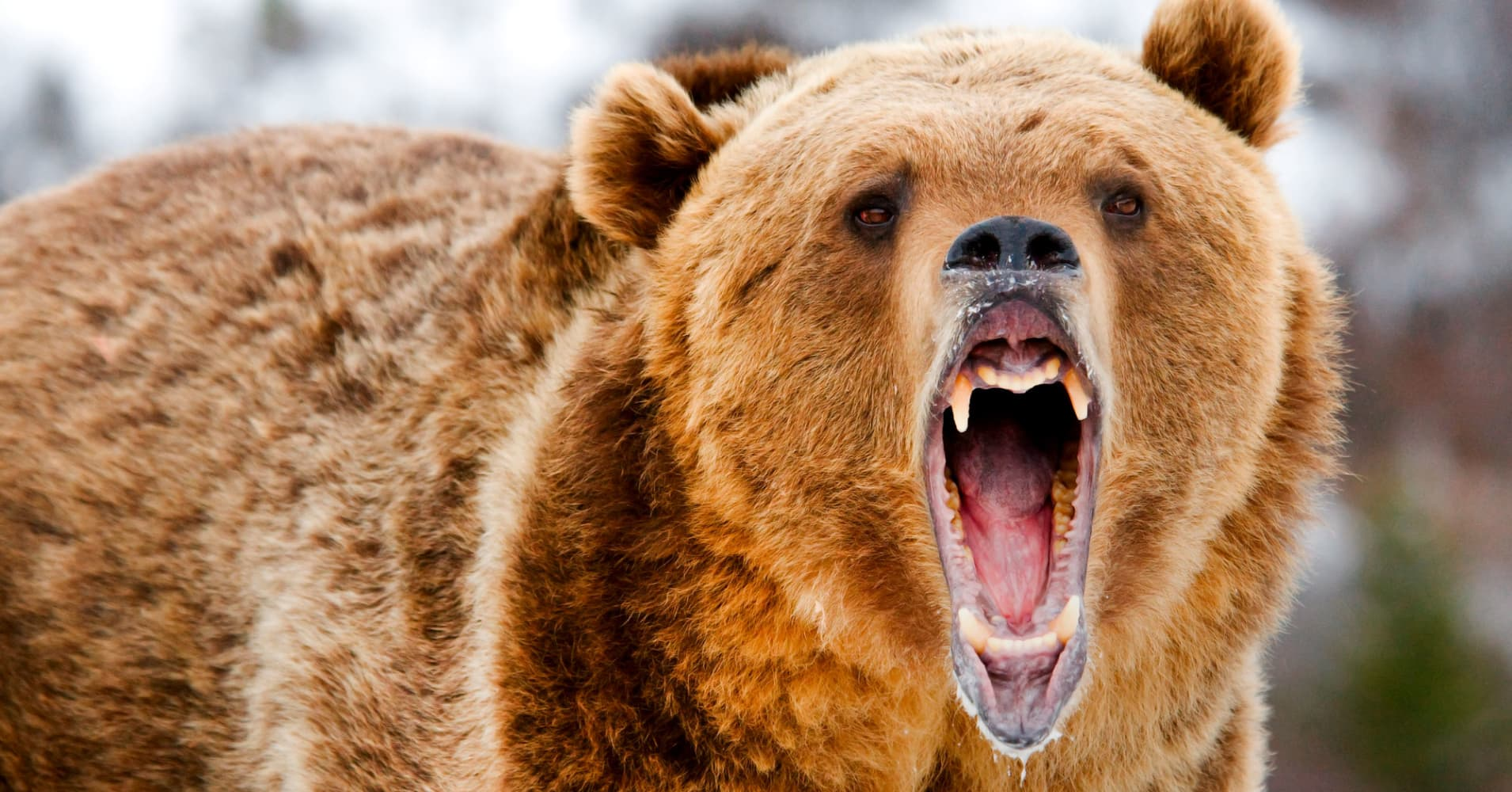 Monster rallies are often synonymous with bear markets, Boockvar warns