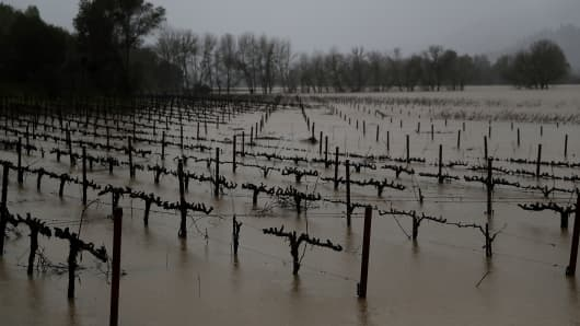 Vines at a vineyard stand in floodwaters on January 10, 2017 in Forestville, California.