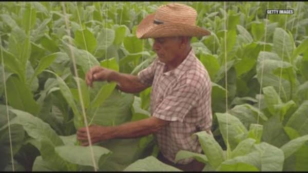 Here's why farmers won't stop growing tobacco