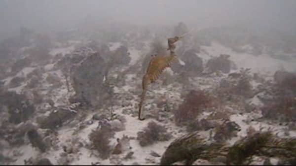 Scientists spot living ruby sea dragon for the first time