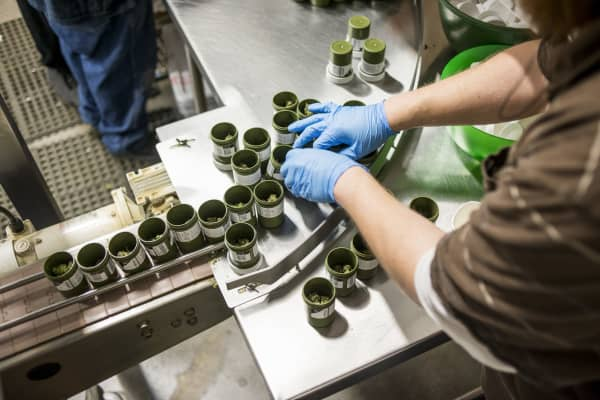 Higher Standard Packaging containers are filled with marijuana at the Terrapin Care Station production facility in Aurora, Colo., Jan. 12, 2017.
