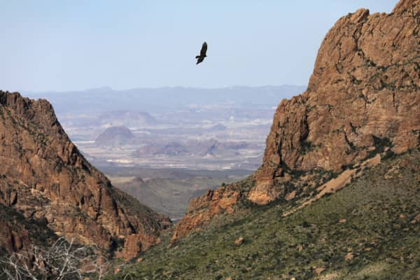 A falcon flies over the Chisos Basin in the Big Bend National Park in West Texas.