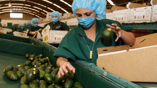 A worker of the San Lorenzo Packing Company checks and fills boxes with avocados that will be shipped to U.S. in the state of Michoacan, Uruapan, Mexico.