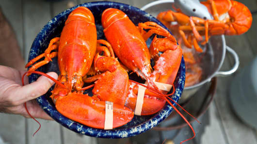Fresh Maine Lobsters
