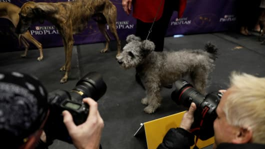 A Pumi is photographed after being introduced as one of the new breeds allowed to compete in this year's Westminster Kennel Club dog show in New York, U.S