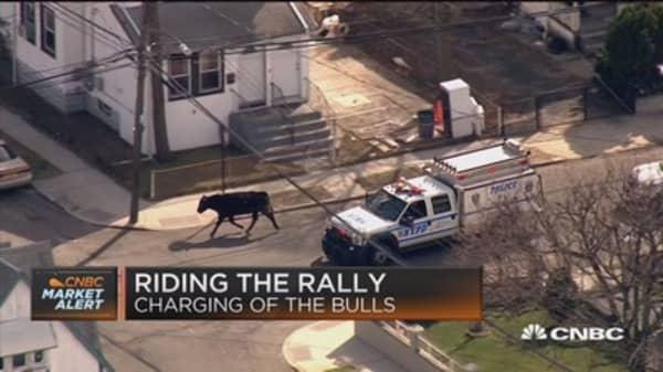 Bull creates utter chaos