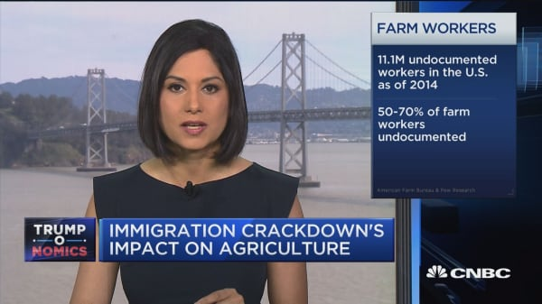 Immigration crackdown's impact on agriculture