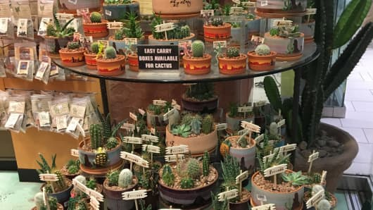 Phoenix Sky Harbor International Airport sells $1 million of cactus plants a year.