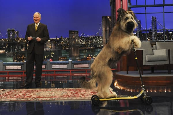 Stupid pet tricks segment from The Late Show with David Letterman on the CBS Television Network.