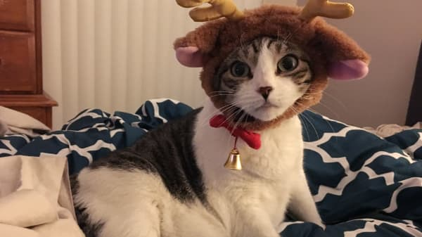 For one of our annual holiday parties, we dressed Bubbles as a reindeer. She did not appreciate it as much as our friends did.