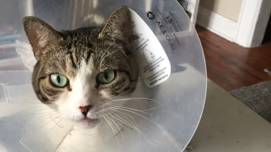I spent $7,000 on my cat's medical bills and I have only one regret