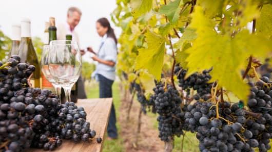 Vineyard wine grapes winery