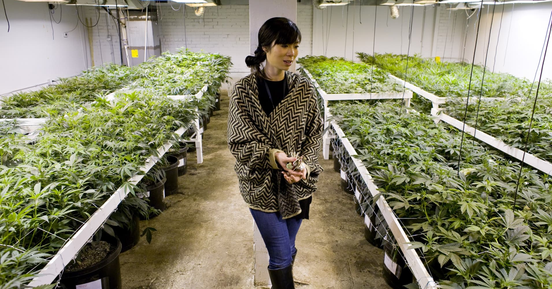 A medical marijuana operation In Colorado run by Kristi Kelly, co-founder of Good Meds Network.