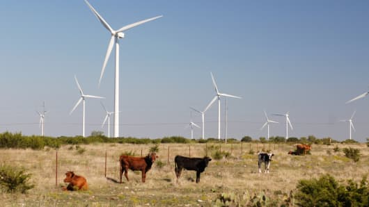Cattle graze at the Buffalo Gap Wind Power project in Taylor and Nolan counties just south of Abilene, Texas.