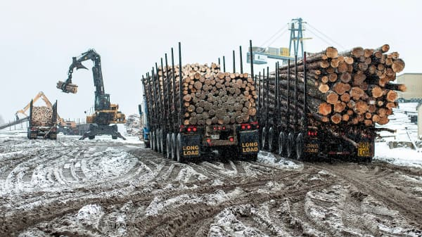 Trucks deliver raw lumber yard at the Resolute Forest Products mill in Thunder Bay, Canada, Ontario. Resolute Forest Products, the largest mill east of the Rockies, sends 90 percent of lumber produced south to supply the demand for housing construction for the U.S.