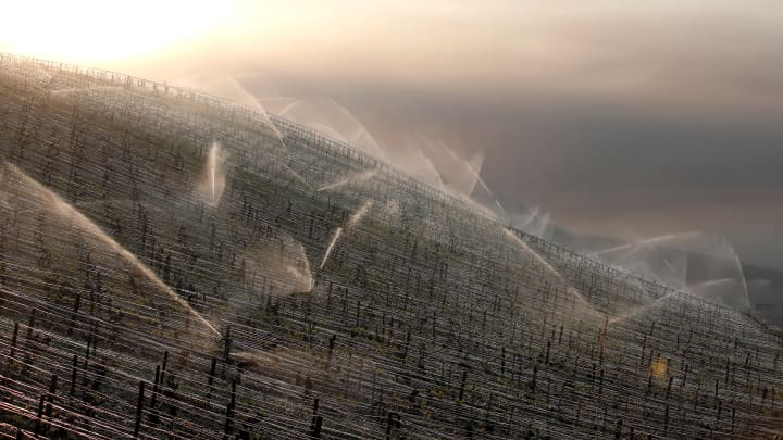 Water is sprayed early in the morning to protect vineyards from frost damage outside Chablis, France.