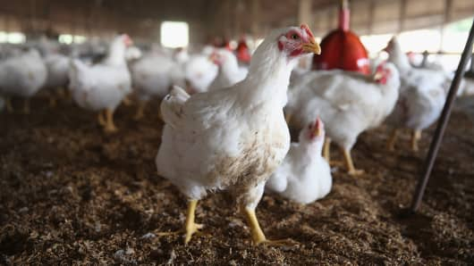 Tyson foods move to sell antibiotic-free chickens.