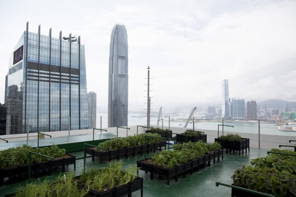 JLL's urban farm on top of the Bank of America Tower in the Central district of Hong Kong, China.