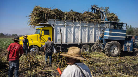 Workers load a truck with sugarcane in a field in the town of San Cayetano in the municipality of Tepic, Nayarit state, Mexico, on Thursday, May 18, 2017. If U.S. reinstates duties on sugar imports, Mexico's government should immediately respond with reciprocal tariffs on imports of high fructose corn syrup from the U.S.