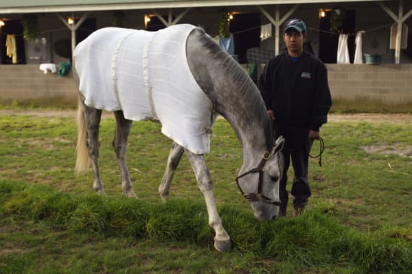 Tapit grazes in the barn area at Churchill Downs on April 29, 2004, in Louisville, Ky.