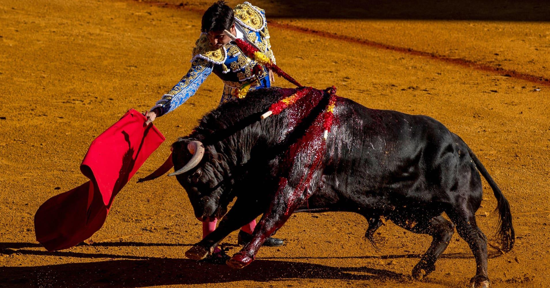 Mature taking a bull