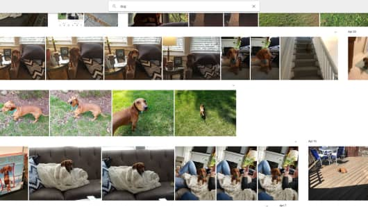CNBC Tech: Google Photos dog