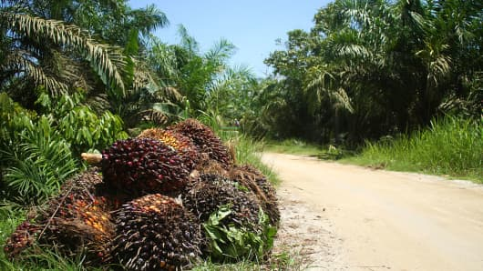 A palm oil plantation on September 21, 2016 in Indonesia.