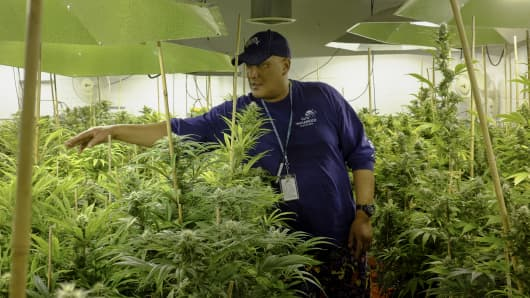 Manager Ross Phillip speaks while standing in a flower room at the grow facility for Sense of Healing dispensary in Denver, Colorado.